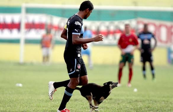 El canino fue una de las atracciones en el juego entre el equipo 'currambero' y el 'tiburón'.